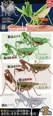 15x19cm Bandai Capsule Toy Insect かまきり Kamakiri Mantis Cplpleted Set 5pcs