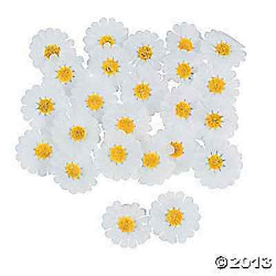 Polyester White Daisies 250 Piece Party Decoration