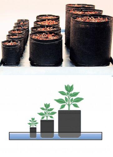 5 Root Pouch Rouge Géotextile Smart grow Pot déco container 4L - 1 gallon