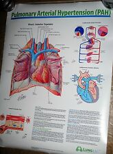Medical poster, 18x24, Pulmonary Arterial Hypertension, Elsevier, Netter