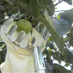 Recolector-de-frutas-metal-Conveniente-jardineria-para-recoger-arboles-altG2