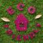 Hemway-Eco-Friendly-Glitter-Biodegradable-Cosmetic-Safe-amp-Craft-1-24-034-100g thumbnail 95
