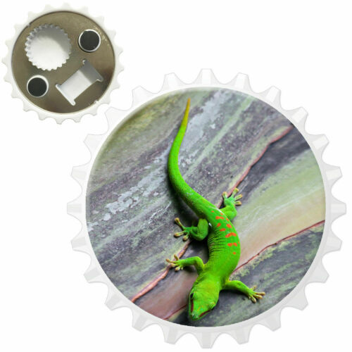 Green Lizard Climbing On Tree Trunk Bottle Opener Fridge Magnet