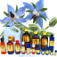 3ml-Essential-Oils-Many-Different-Oils-To-Choose-From-Buy-3-Get-1-Free thumbnail 13