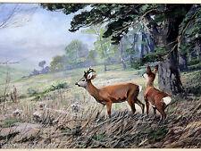 H. TUBO Karl Kaufmann? ACQUERELLO ANTICO Caprioli Rehkitz KITZ foresta watercolor Deer
