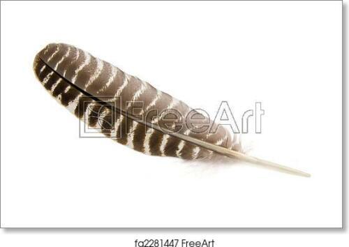 Wild Turkey Feather Art Print // Canvas Print Poster C Wall Art Home Decor
