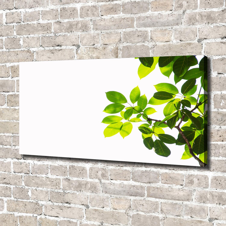 Leinwandbild Kunst-Druck 140x70 Bilder Blaumen & Pflanzen Laub