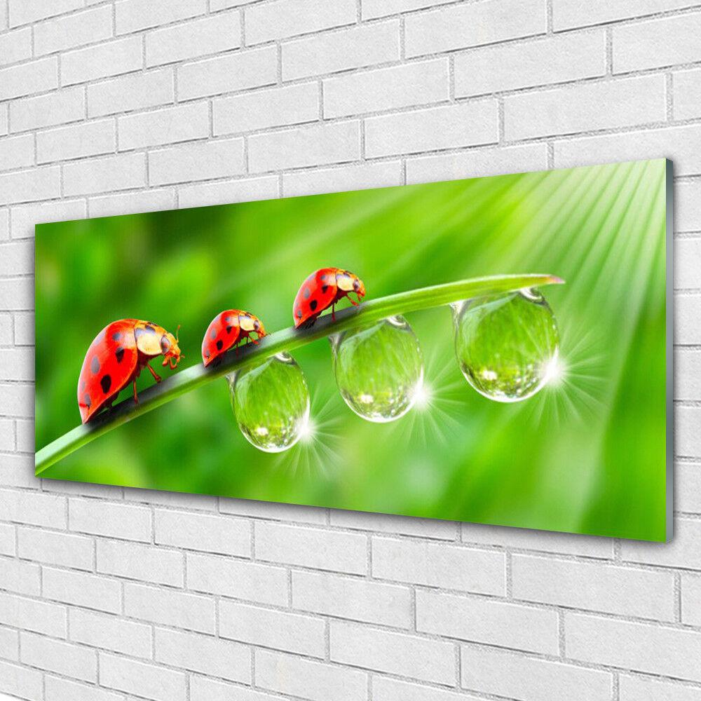 Tableau murale Impression sous verre 125x50 Floral Herbe Coccinelle Rosée