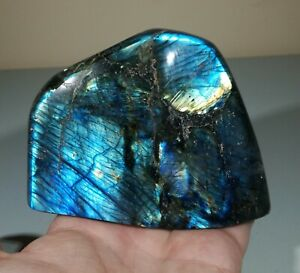 Bolivia Large Stromatolite Polished Slice Freeform Specimen Display Piece