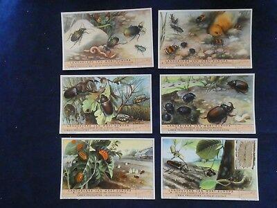 Analytisch Liebig Chromo - Landkevers Van West-europa - 1949