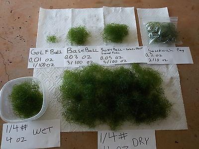 Baseball Of Chaetomorpha Chaeto Chato Macro Algae Plant Refugium Coral Saltwater