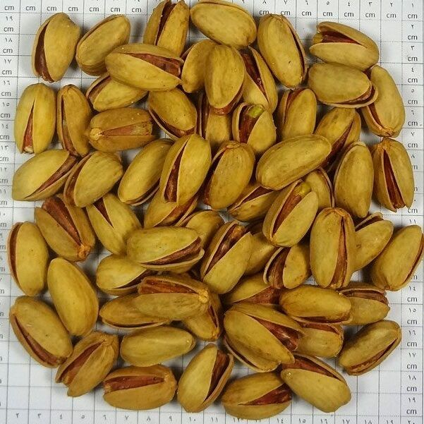 persian pistachios zaferani and Salted 4 LBS Bag,InShell Naturally Opened,Nuts