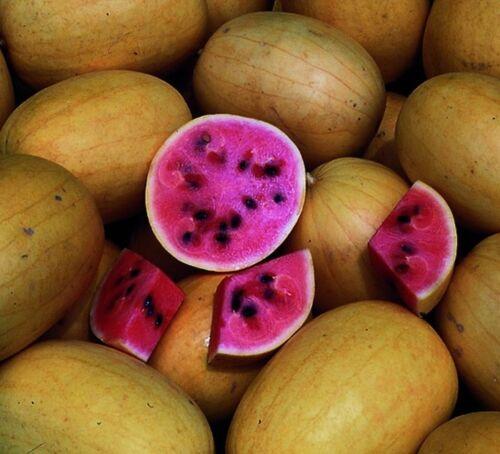 Golden Midget Watermelon Seed Pink Flesh Melon Garden Seeds 1.0gr to 10gr