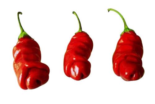 100 Samen Peter Pepper Rot Penis Chili