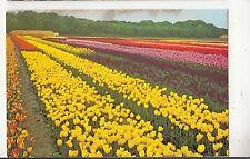 BF30017 tulipshow vogelenzang types netherland  front/back image