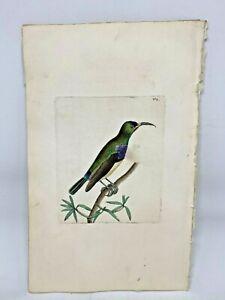 Leona-Creeper-1783-RARE-SHAW-amp-NODDER-Hand-Colored-Copper-Engraving