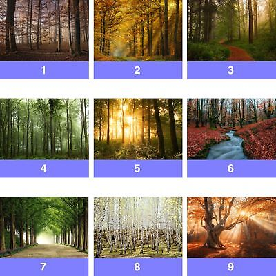 FW-1116 Forest Fog Nature  Photo Wallpaper Wall Mural