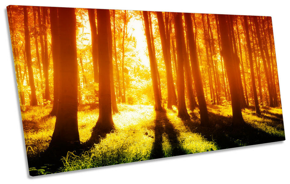 Sunset Forest Landscape PANORAMIC CANVAS WALL ART Box Frame