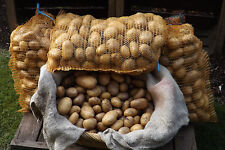 """""""Moor-Kartoffeln  Belana""""  festkochend Salatware 5 kg"""