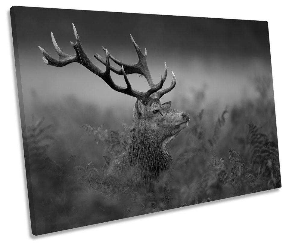 Wild Stag Deer B&W CANVAS Wand Kunst Bild Drucken Single
