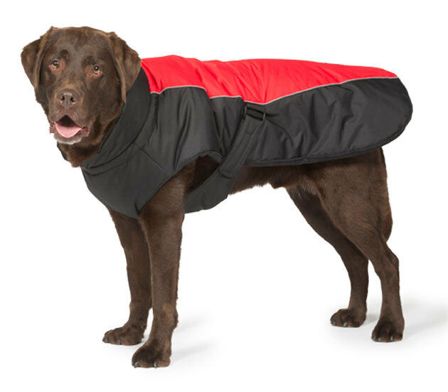 Sports Luxe Red Dog Coat  55cm