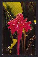 c1951 Nani Li'i Torch Ginger flower Hawaii postcard