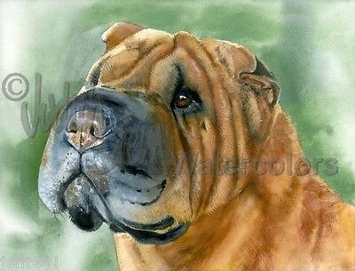 Chinese Shar Pei Dog Art Print Watercolor Painting Judith Stein Signed SKIN DEEP