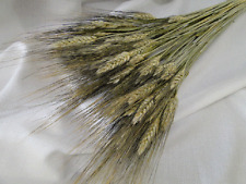 NATURAL DRIED BLACK BEARDED WHEAT FLORAL FLOWER DRIEDS FILLER STEMS