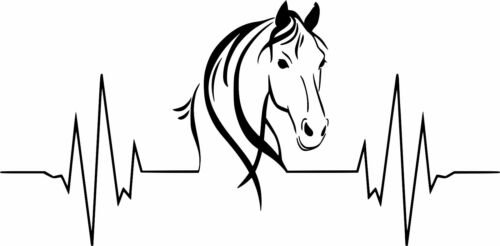Equestrian Rider Horse Heartbeat Vinyl Decal Free Shipping #34