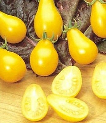 300 YELLOW PEAR TOMATO Lycopersicon Seeds *Gift/CombS/H