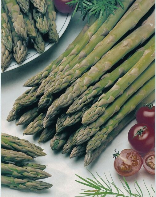 Vegetable - Asparagus - Connover's Colossal - 80 Seeds - Economy