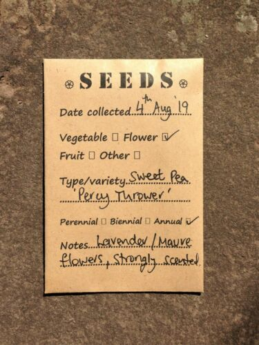 seed organising Pack of 10 seed envelopes seed swap save seeds seed collecting