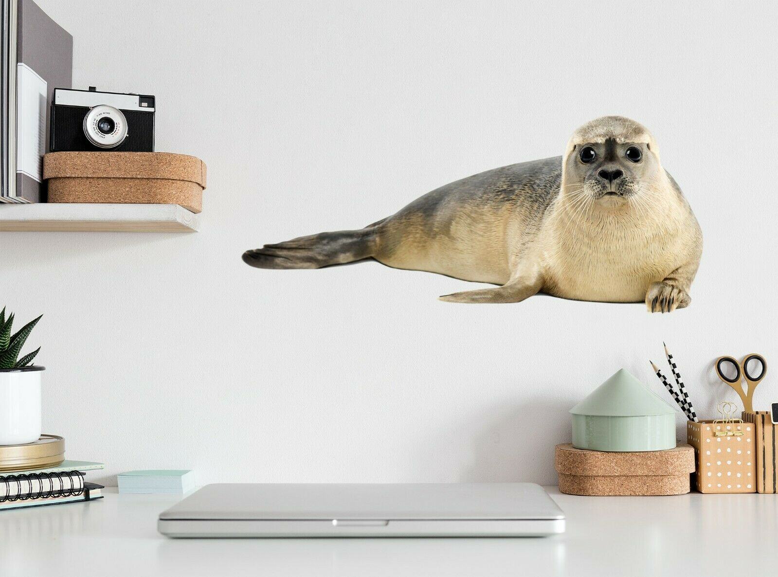 3D Big Eyes Sea Lion A64 Animal Wallpaper Mural Poster Wall Stickers Decal Zoe