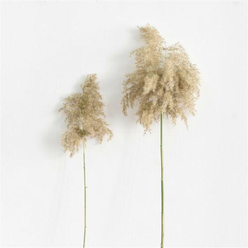 20pcs Dried Plants Pampas Grass Natural Phragmites Communis Wedding Flower Bunch