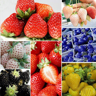Garden 9 colors 100 PCS Strawberry Seeds Fruit Vegetables Seed Nutritious Bulbs