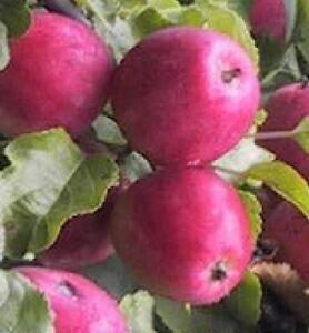 edible fruits fruit of life