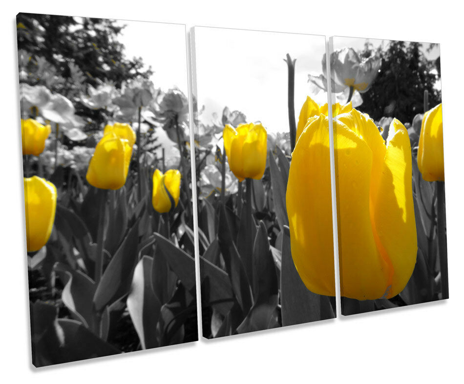 Tulips Floral Flowers TREBLE CANVAS WALL ART Box Framed Picture