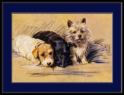 English Picture Print Scottish Cairn Terrier Dog Art