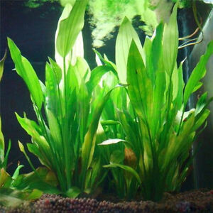 Artificial-Plastic-Aquarium-Plant-Green-Water-Grass-Ornament-Fish-Tank-Decor-New