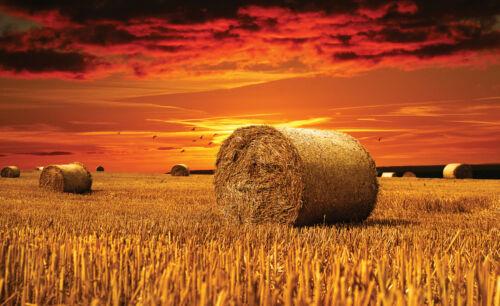 415 -Sonne Wiese Gras Sommer Landschaft Gold Himmel Wolke VLIES Fototapete-FELD-
