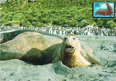 Aufrichtig Seeelefant Schmuckblatt 1.2