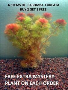 Red-Cabomba-Piauhyensis-Furcata-Fanwort-Bunch-Live-Aquarium-Plants-BUY2GET1FREE