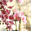 thumbnail 3 - Beautiful-Artificial-Phalaenopsis-Orchid-Flower-Bunch-of-2-White-Pink-Purple