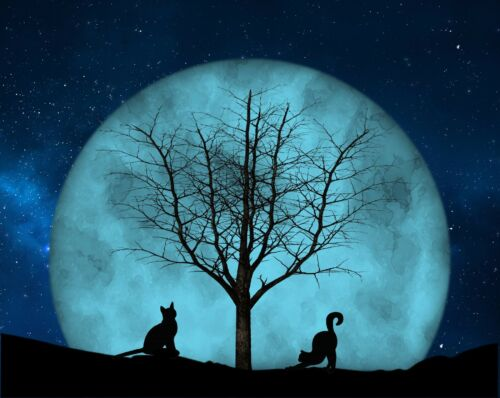 Teal Blue Black Wall Art Photo Print Cats Moon Tree Home Decor Matted Picture