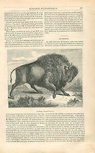 Bison d'Amérique Ménagerie Jardin des Plantes Paris GRAVURE ANTIQUE PRINT 1838 - France - Bison/buffalo of America Ménagerie of the Jardin des Plantes Paris France Article Complet ANTIQUE PRINT GRAVURE 100 % DÉPOQUE 1838 PORT GRATUIT EUROPE A PARTIR DE 4 OBJETS BUY 4 ITEMS AND EUROPE SHIPPING IS FREE Il s'agit d'un fragment de page  - France
