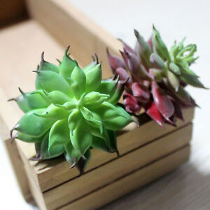 Land-Lotus-Succulent-Grass-Desert-Artificial-Plant-Fake-Flower-Garden-DecorJCA