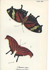 Impresión Litografía Antigua Hermosa Mariposa Mariposas Polillas Kirby 12 1896