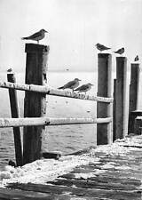 Germany Lake Birds Foto Elis Fuchs HauffenAdolf Korsch Verlag Munchen