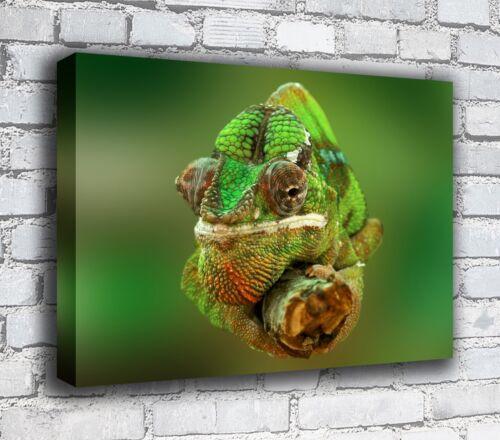 Chameleon Canvas