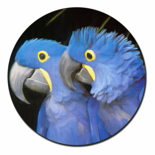 Hyacinth Macaw Parrots Fridge Magnet Stocking Filler Christmas Gift AB-PA1FM